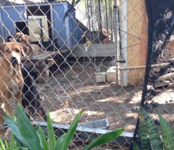 friends for life no kill dog shelter makaha_75451