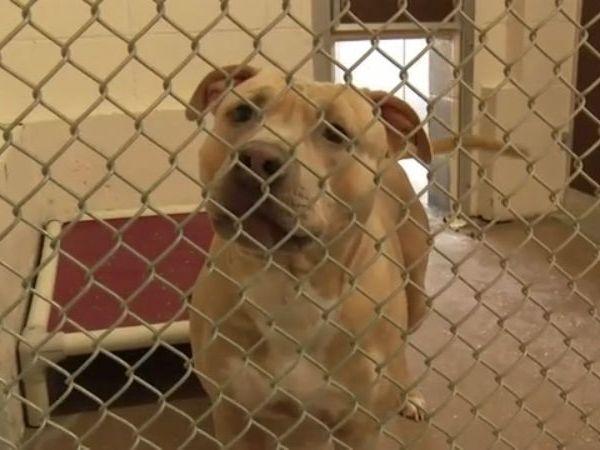 12 Family dog called hero after saving 11-year-old girl from rabid raccoon