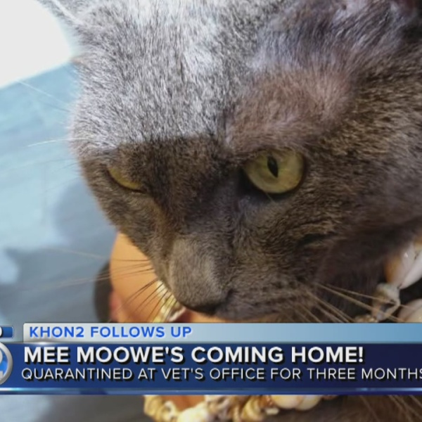 Cat trapped in moving box to be reunited with family