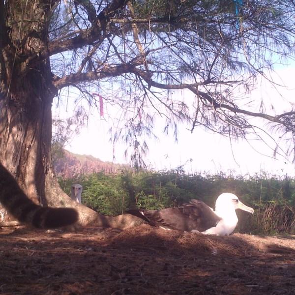 Albatross_79338
