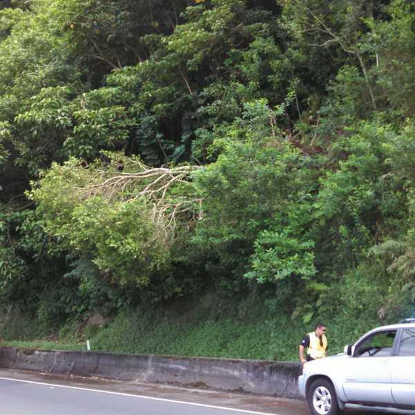 Pali Tree 2-23-15_80196