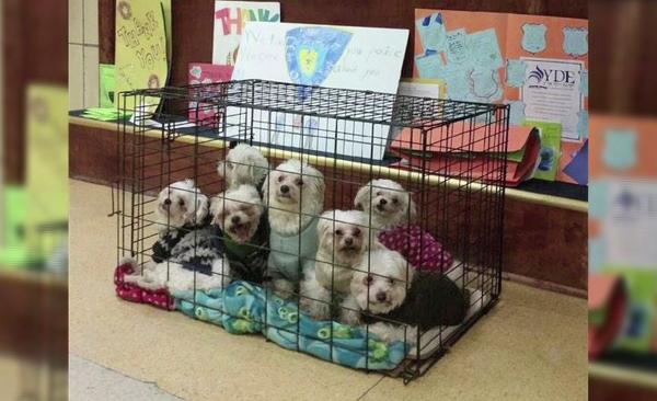 puppies_78513