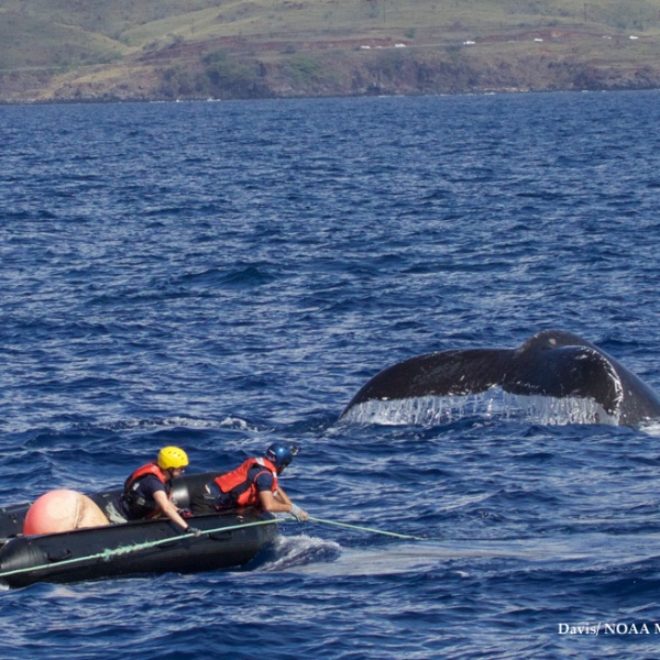whaleboat_79963