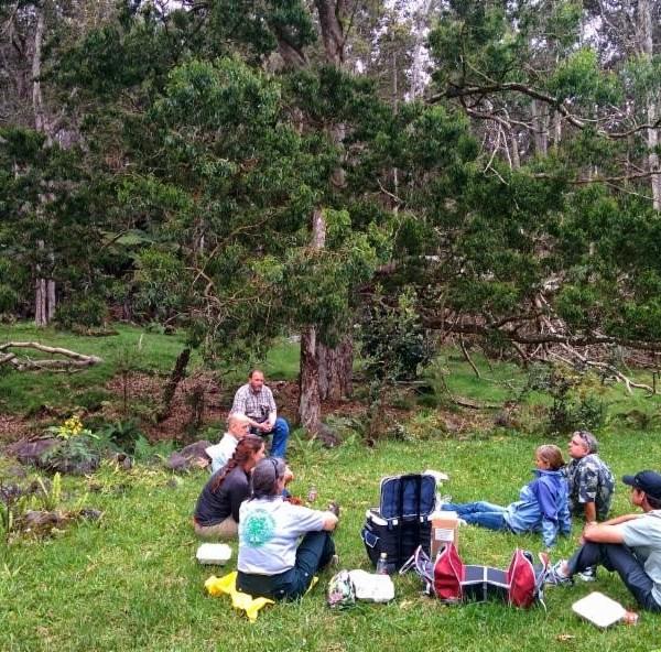 hawaii island forest service_83324