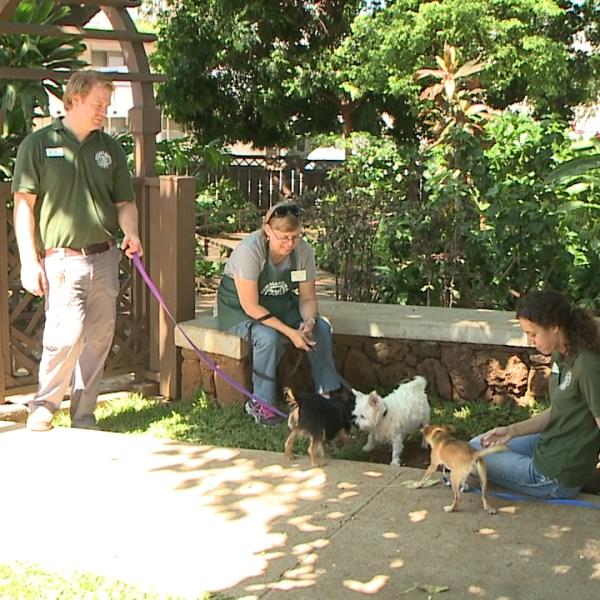 hawaiian humane society_86468