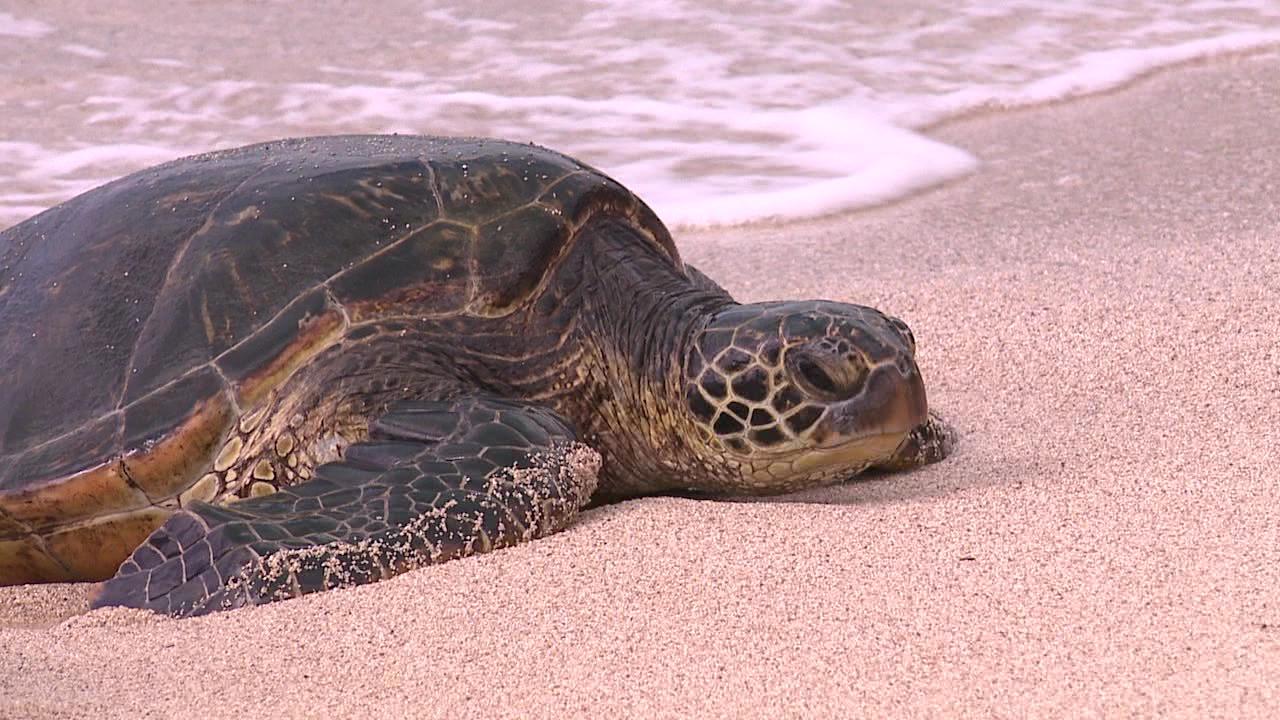 sea turtle_86311