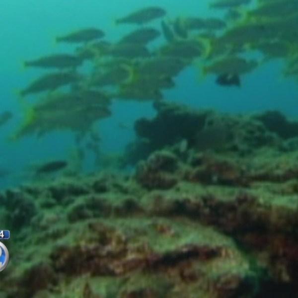 New Oahu aquarium fishing rules take effect