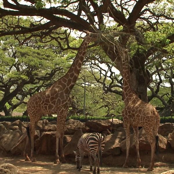 5-7 Honolulu Zoo_93579