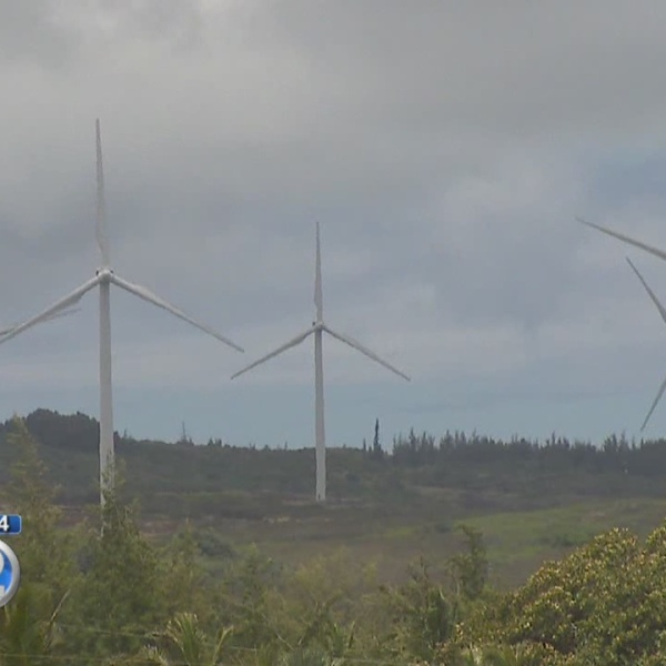 Wind farm company unveils conservation plan to help endangered species in Kahuku