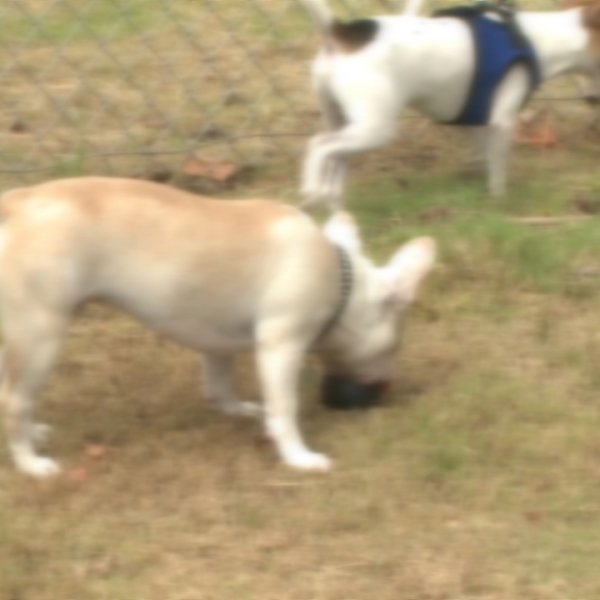 BLURRY DOGS GENERIC 3_100954