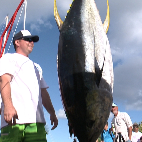 Kewalo Basin Big Fish Chase_98566