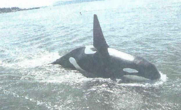 whale1_98119