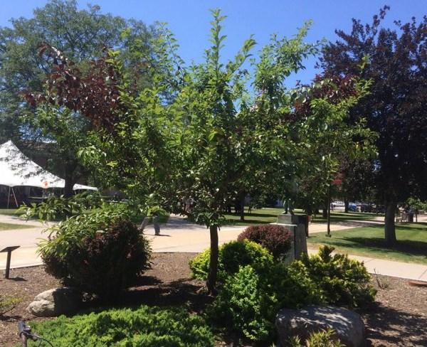 40-fruit-tree-2-e1438001885689_107753