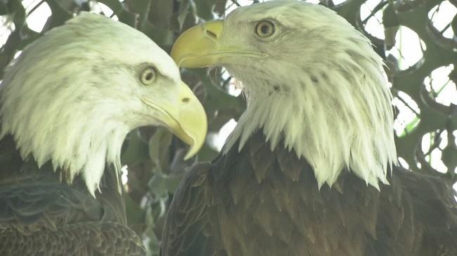 Eagles_107356