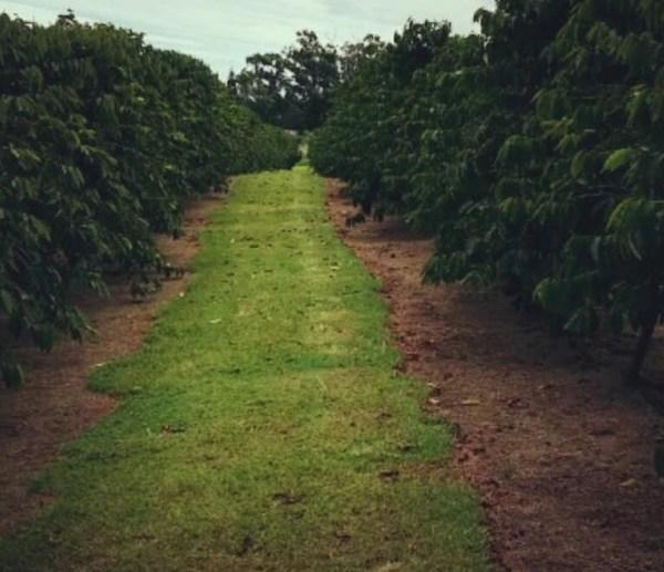 big island crop_108432