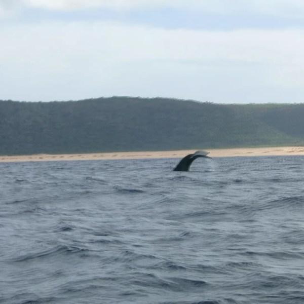 noaa humpback whale niihau_122063