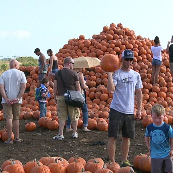 Pumpkin Festival_122768