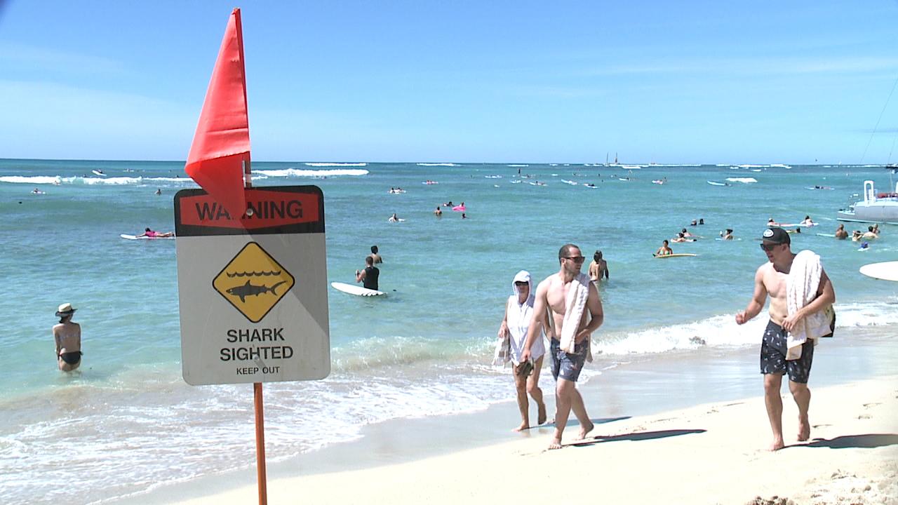 shark sighted sign waikiki_125471
