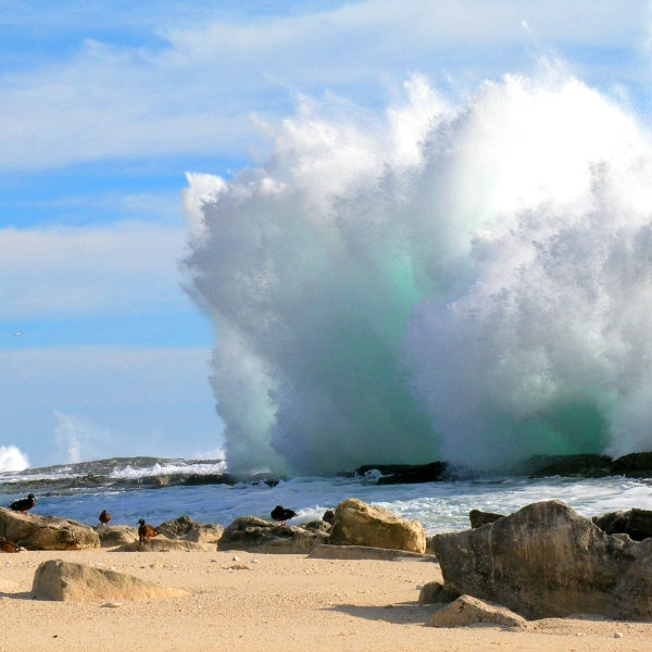 Wave_at_Laysan_MicheleReynolds_121020