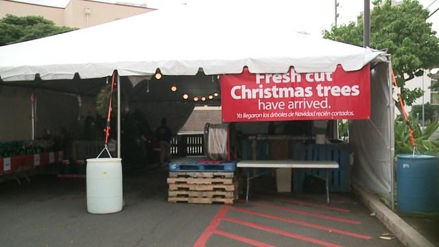 Walmart sells Christmas trees now