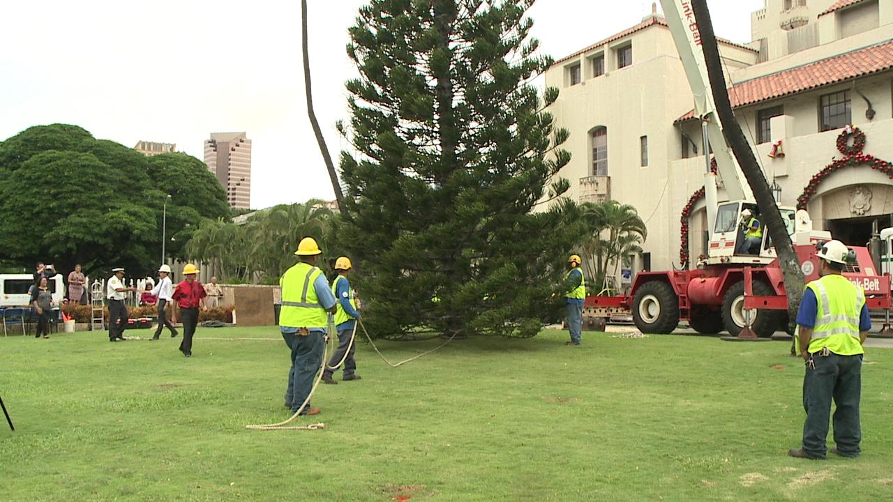 city xmas tree installation_130037