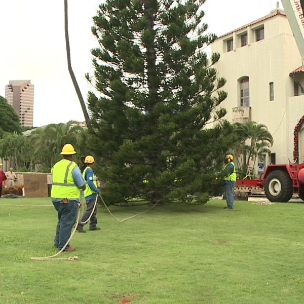 city xmas tree installation_130037
