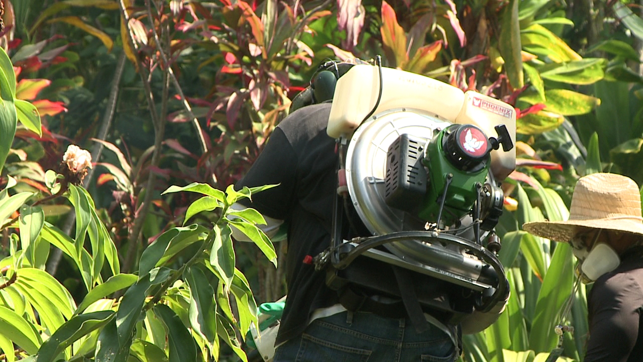 hawaii island mosquito dengue spraying_129848