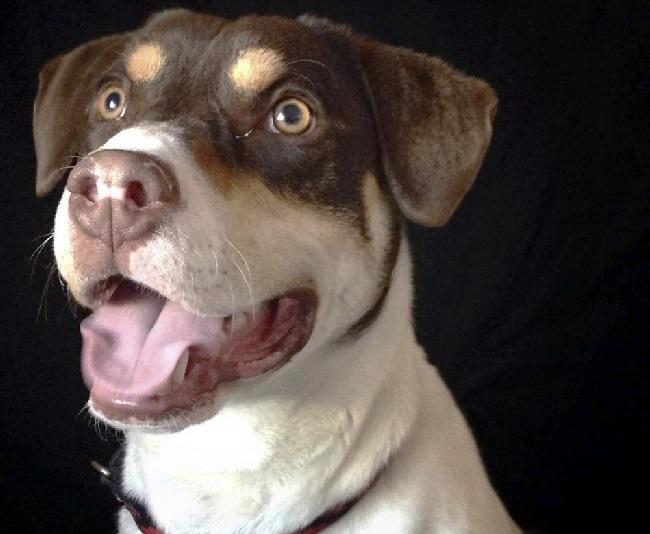 new hampshire dog death_128995