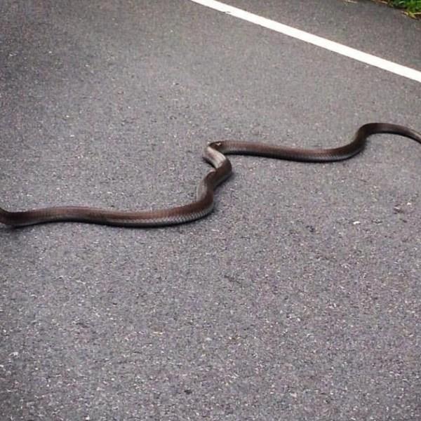 snake edit_127076