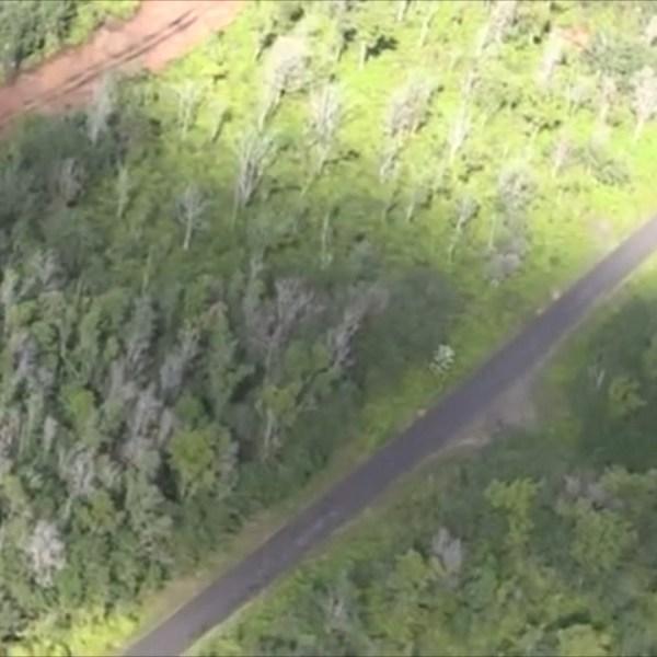 5 OHIA TREE KILLED-VO_135394