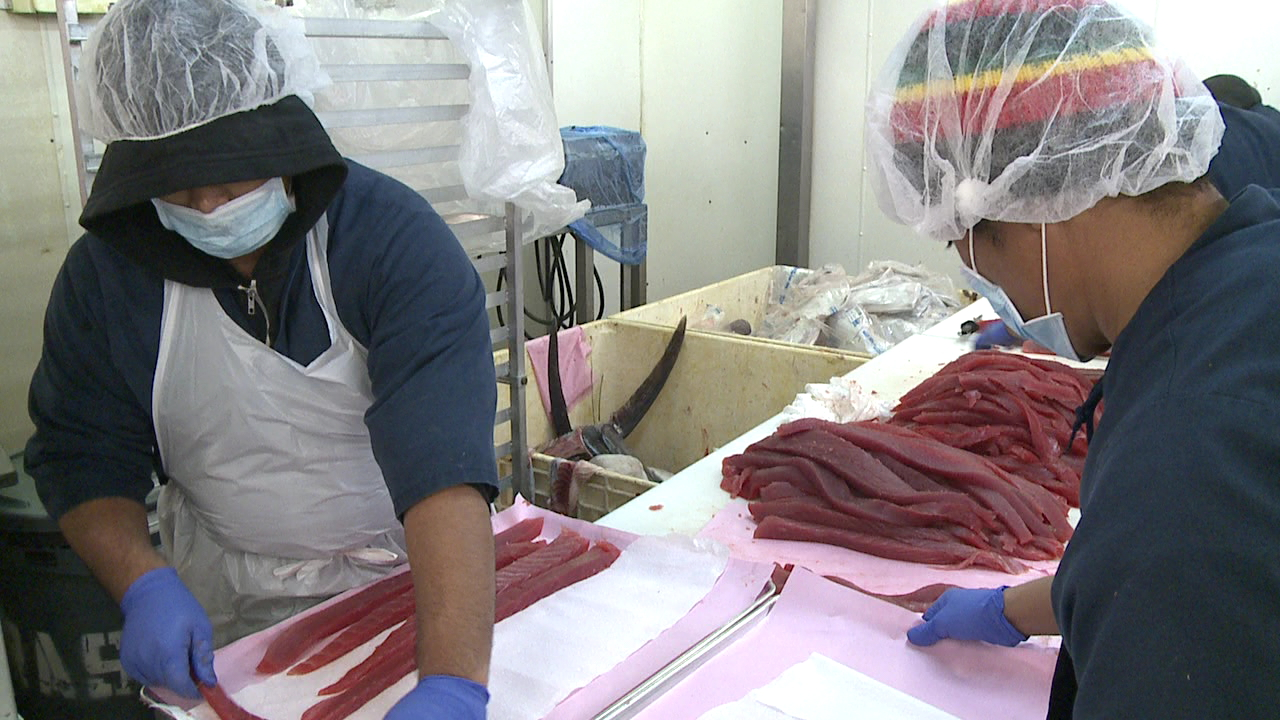ahi processing new year's_135874