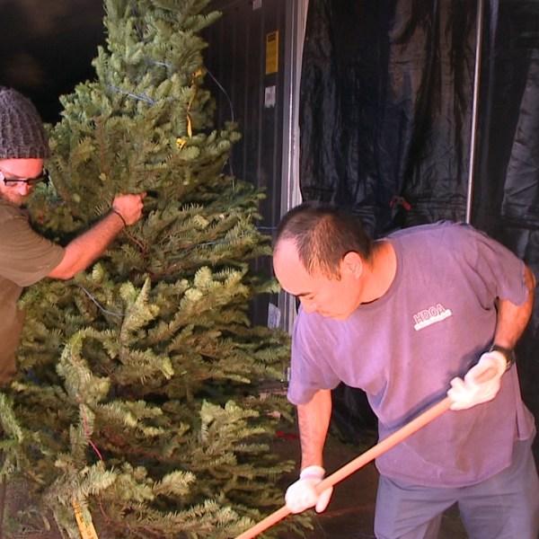 christmas tree shakedown (1)_131896