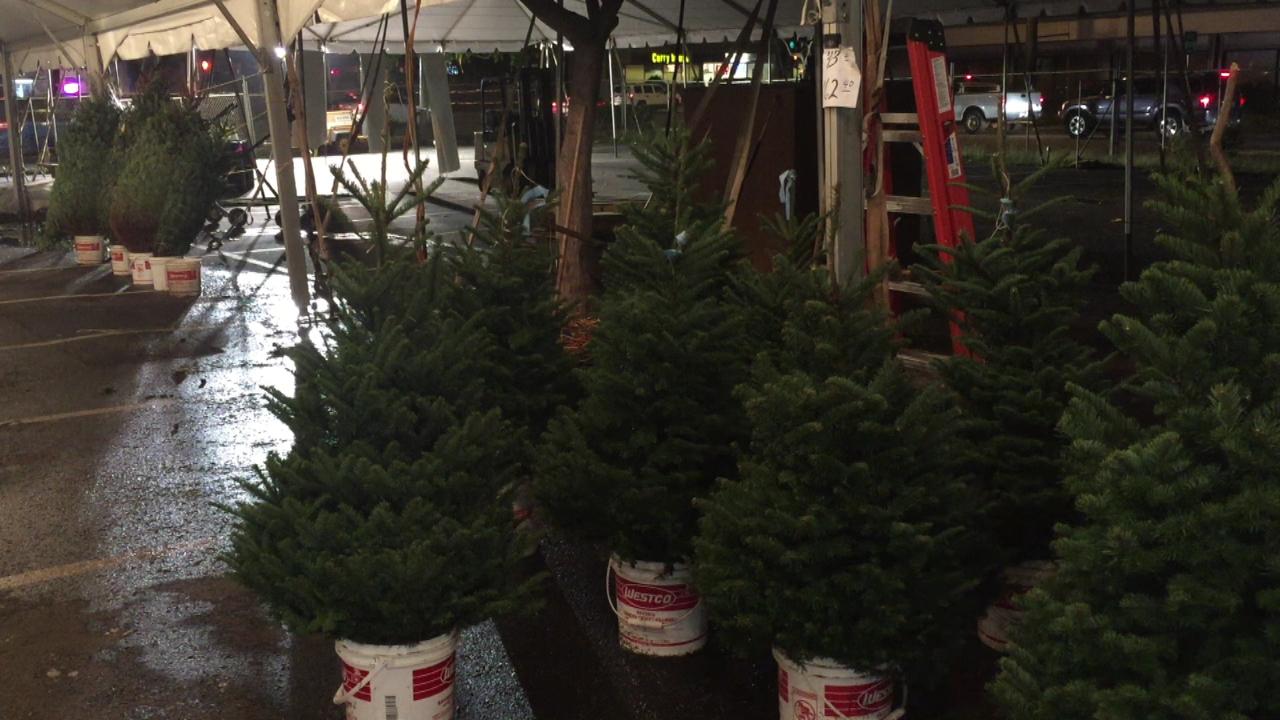 christmas trees richard tajiri_133535