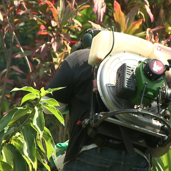 hawaii island mosquito dengue spraying_129848