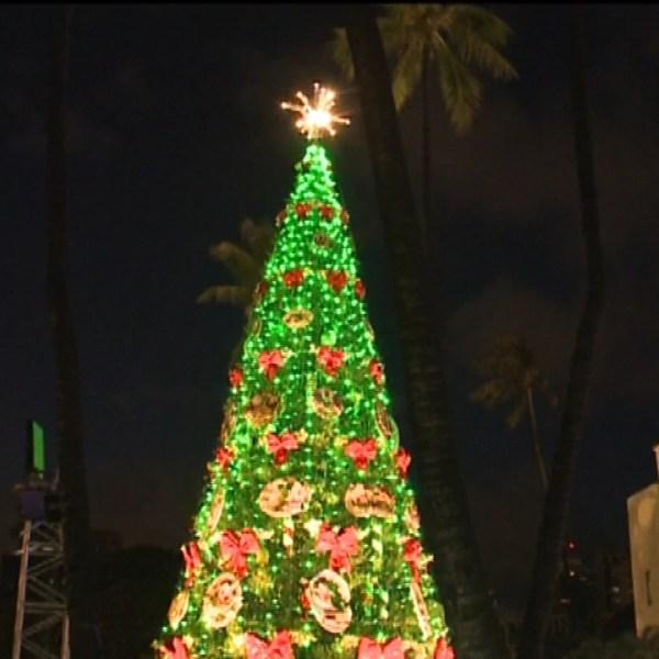 Honolulu Hale Tree_132461