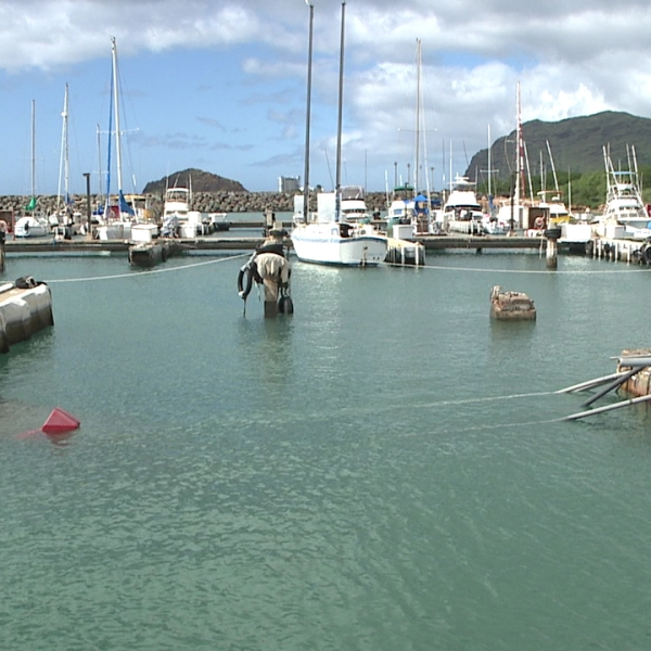 waianae small boat harbor dock collapse (1)_135310