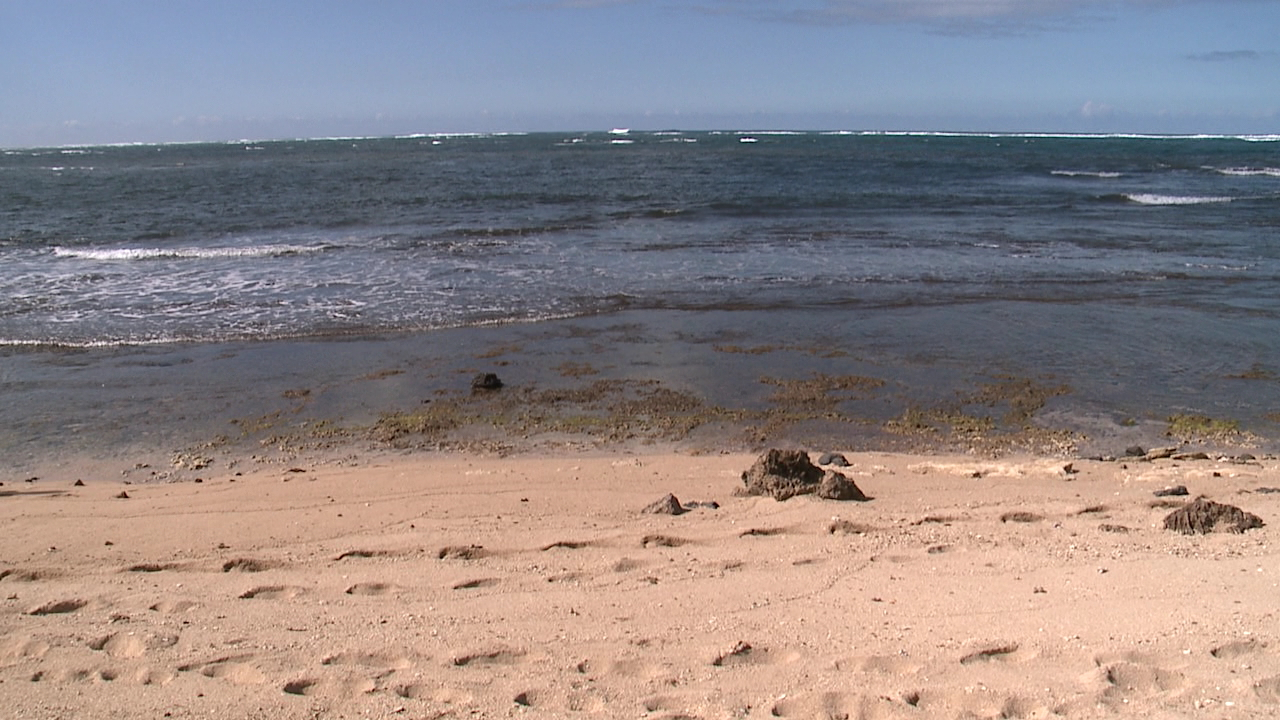haleiwa alii beach park ocean marine crash_139248