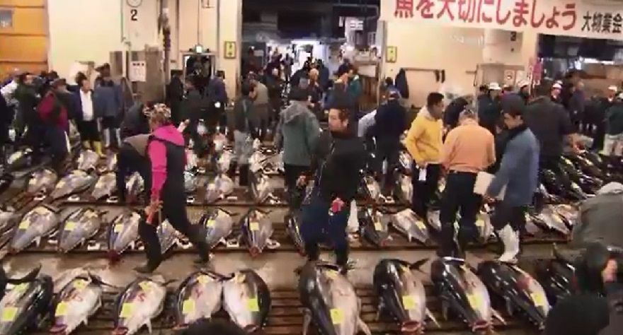 tsukiji fish market auction_136810