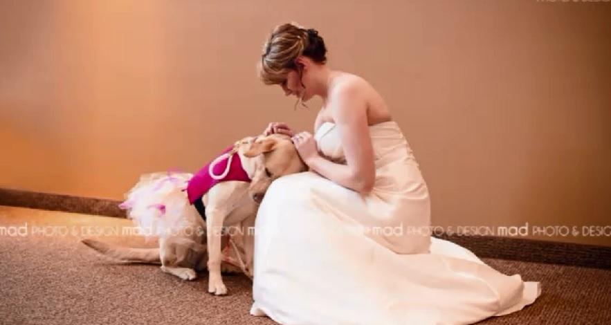 wedding photo service dog_138782