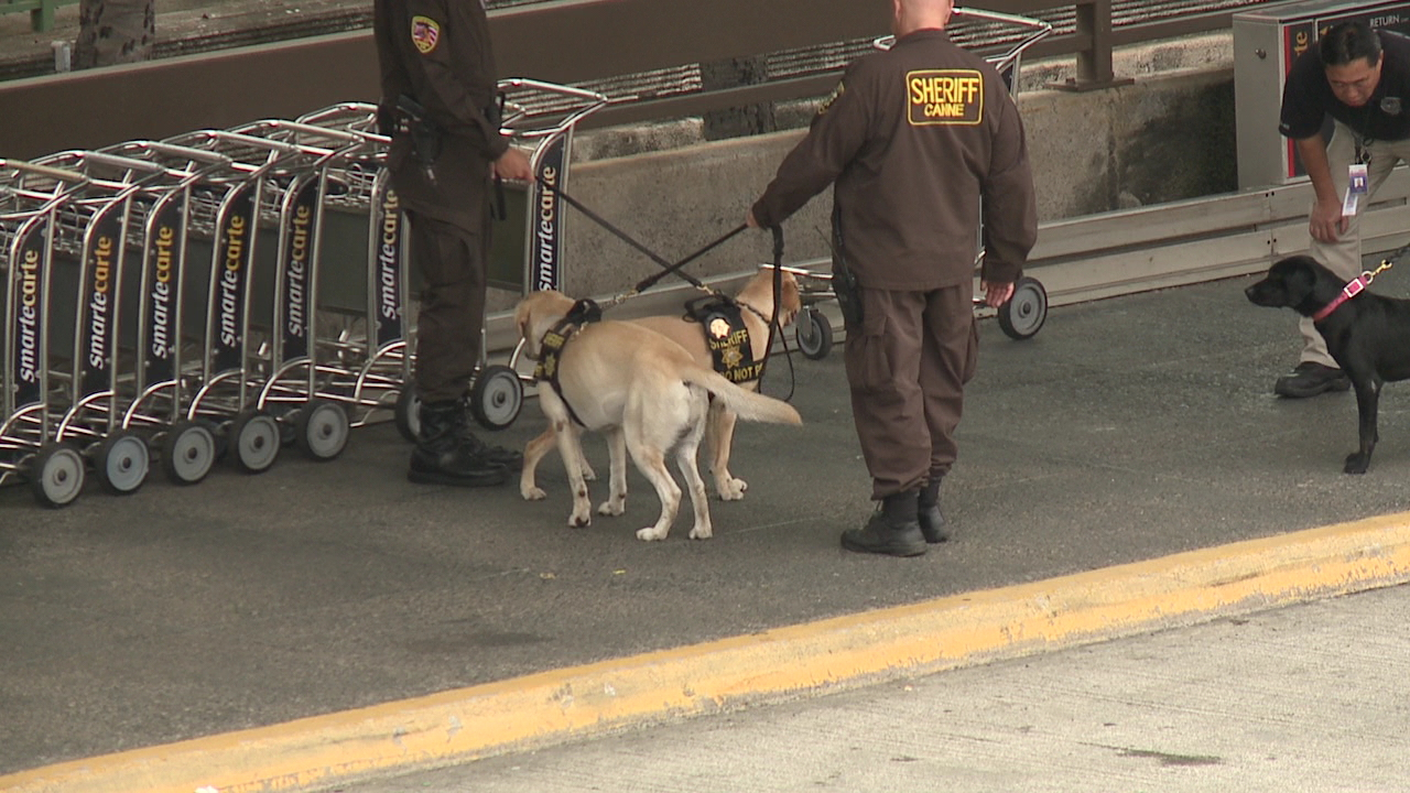 airport k9 bomb sniffing dogs_148984