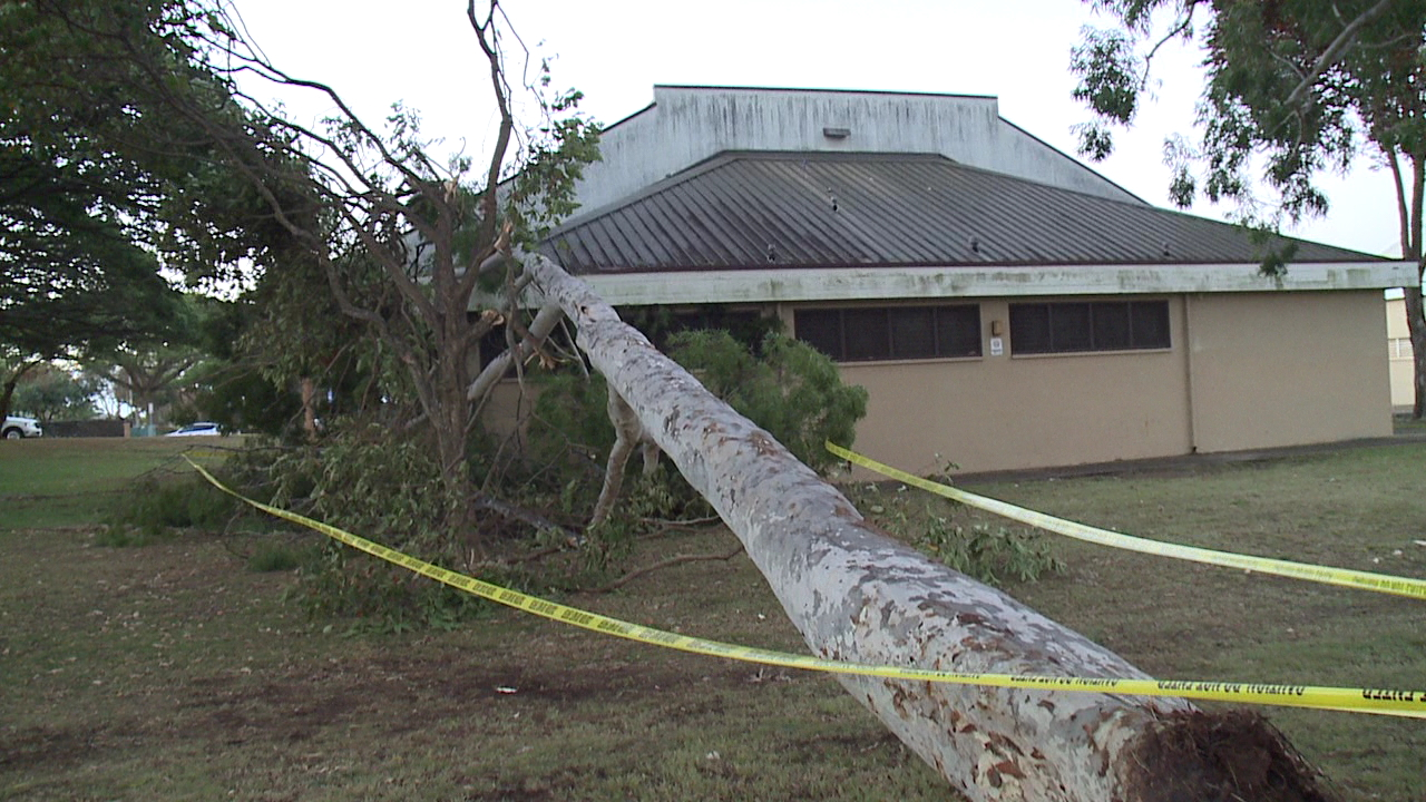 fallen tree mililani district park_146970