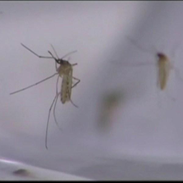 mosquito_138657
