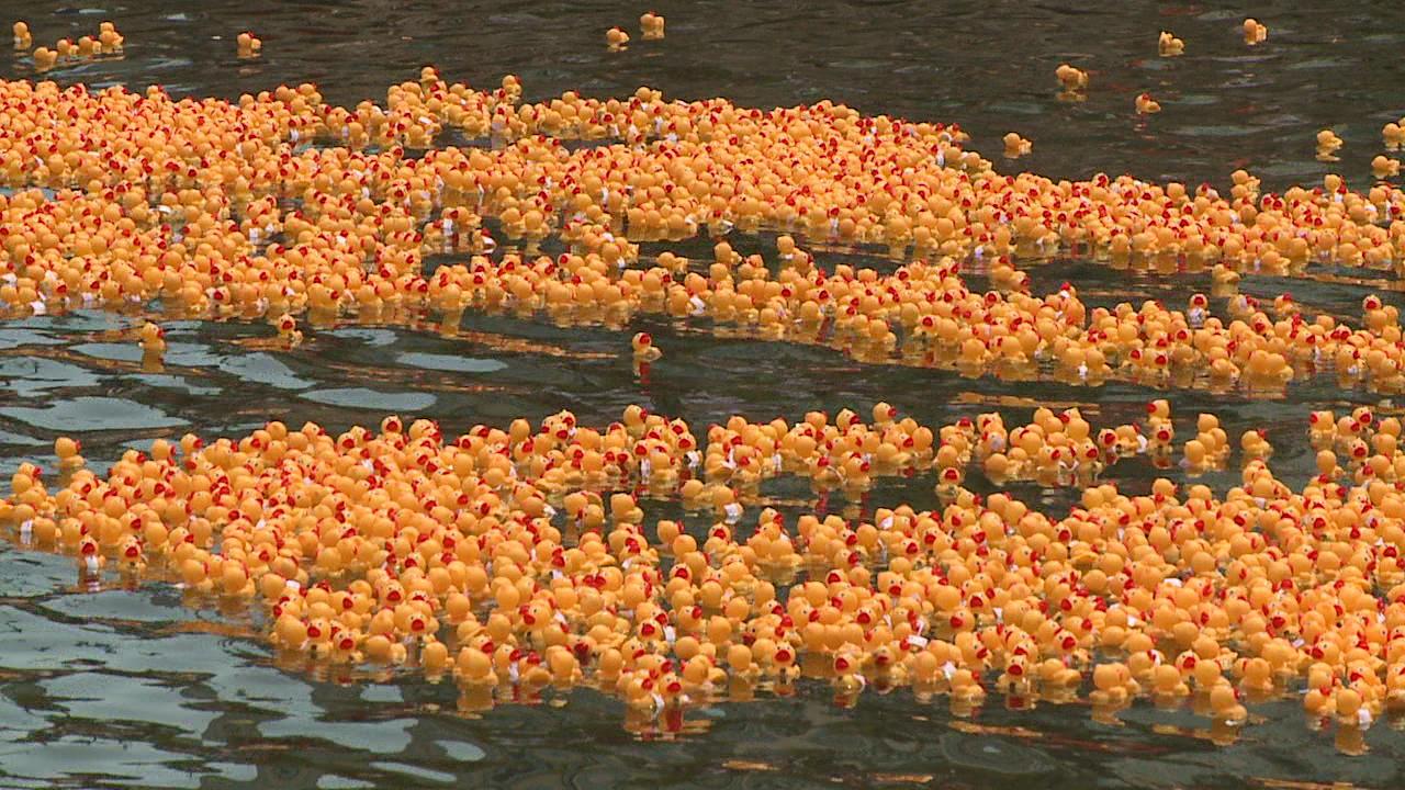 rubber duckie race_149619