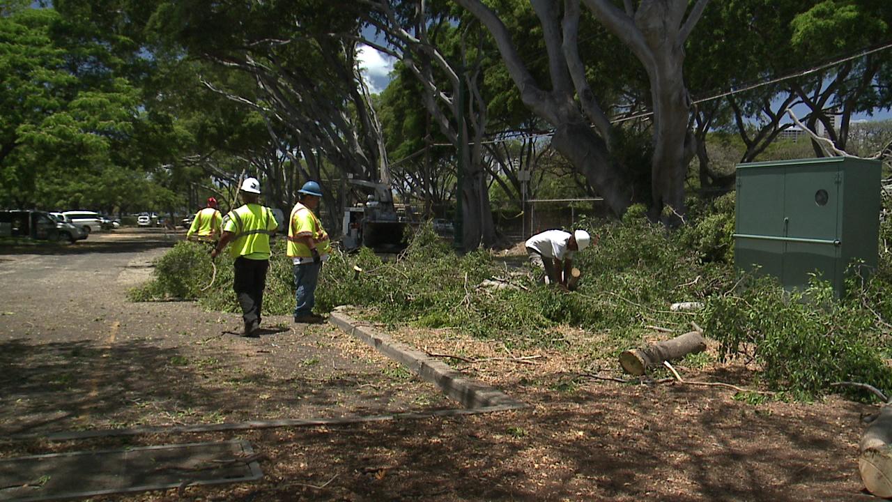 banyan tree removal_154328