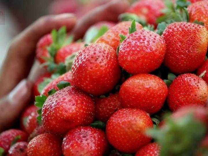 Strawberries_for_sale_at_Mahabaleshwar_152069