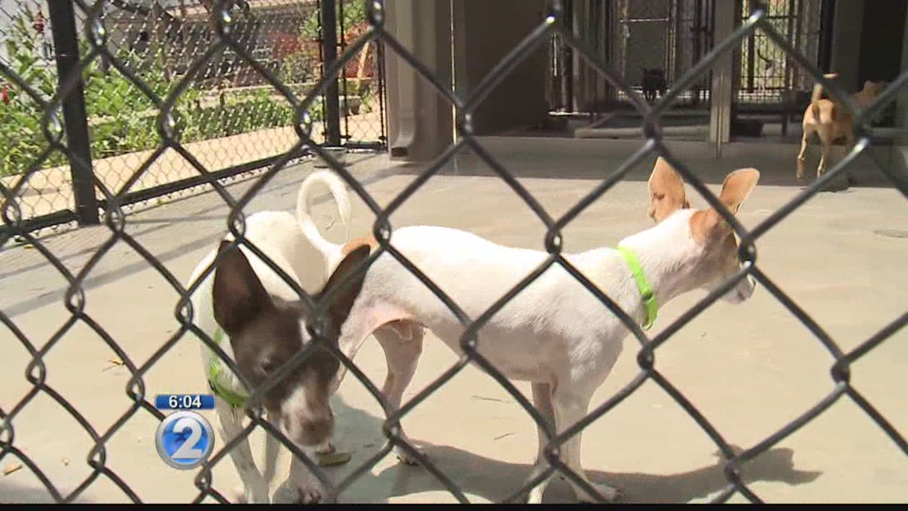Rescued dogs have first day of food and rest at Hawaiian Humane Society