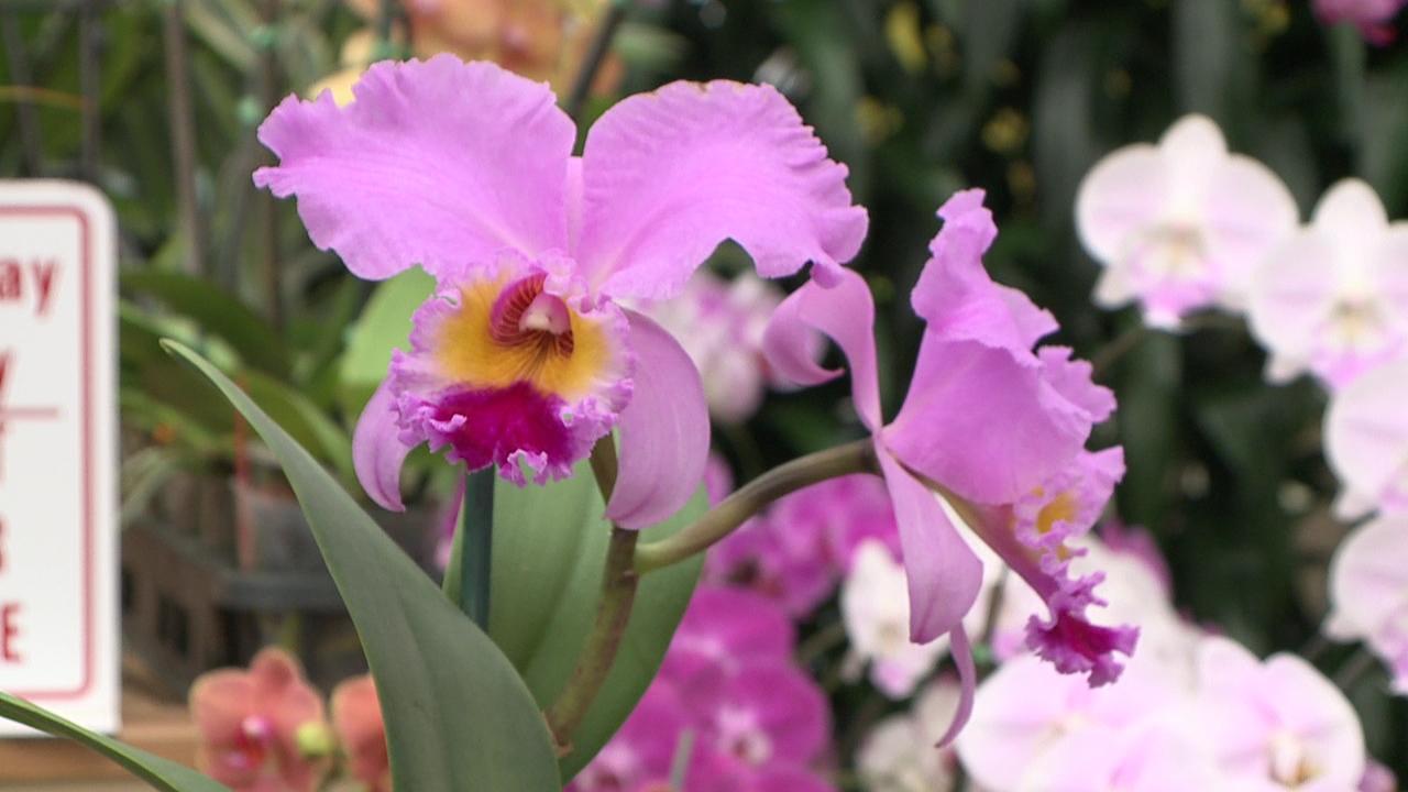 Akatsuka Orchid Gardens_155195