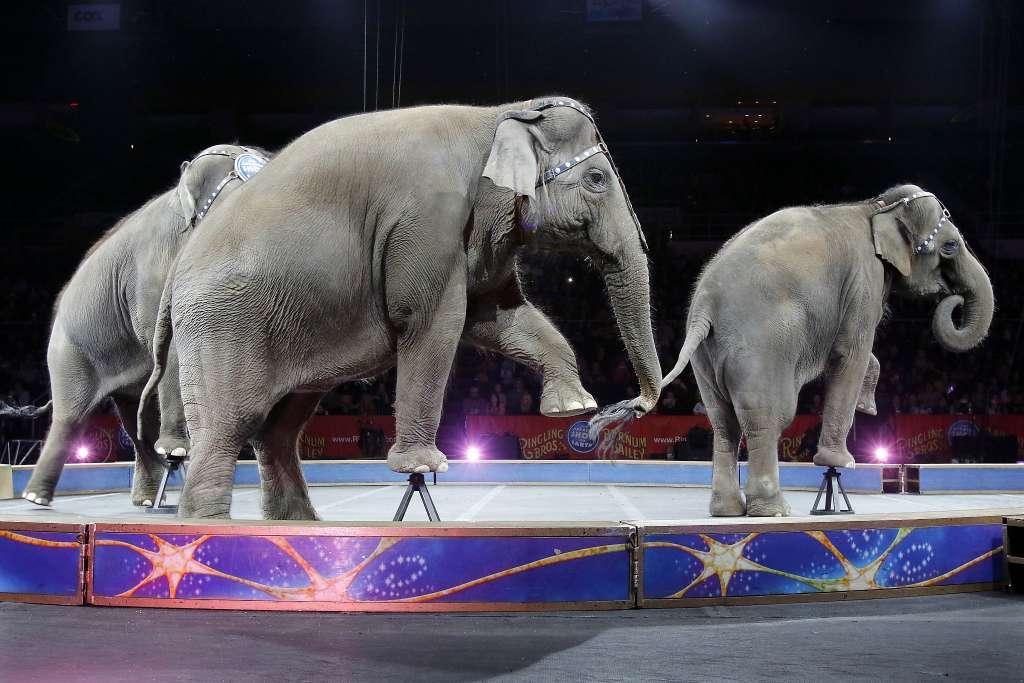 circus elephants_156056