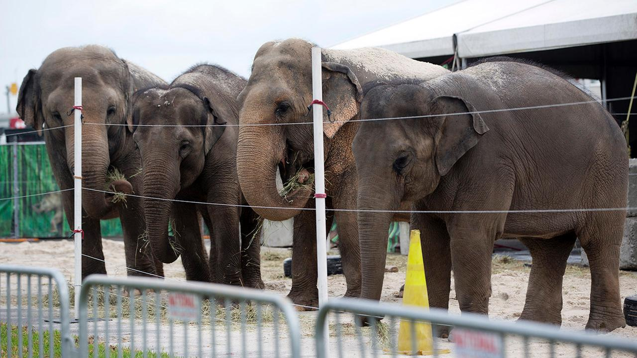 elephants ringling bros._155088