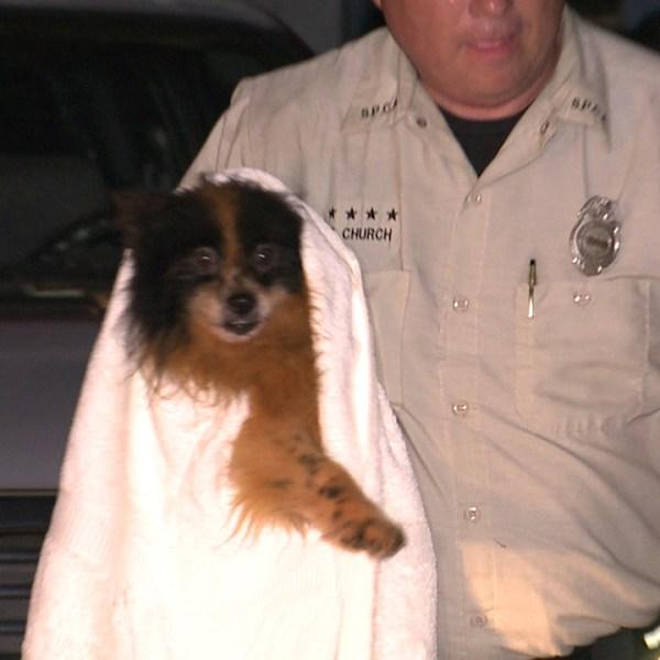 kahaluu puppy rescue_158652